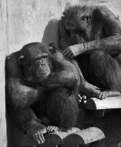 NVR500のVPN設定にめげるチンパンジー